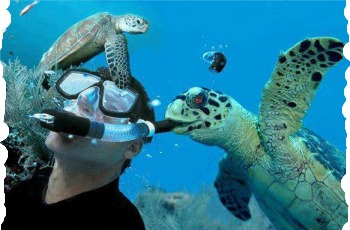Swiming With Turtles